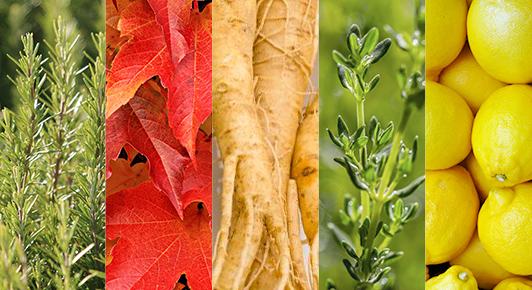 5 extraits végétaux stimulants : romarin, vigne rouge, ginseng blanc, thym et citron